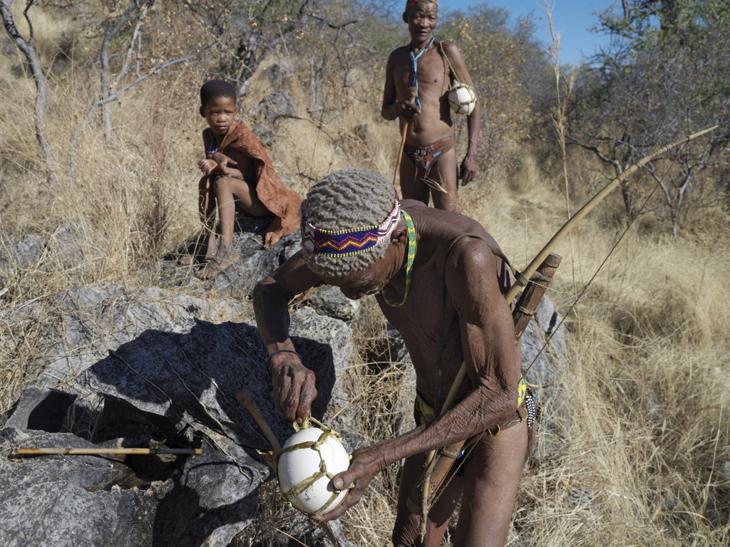 A NS hunter gatherer fills his blown ostrich egg with rainwater using a hollow reed. The NS live in the harsh environment of a vast expanse of flat sand and bush scrub country straddling the Namibia Botswana border. : Stock Photo