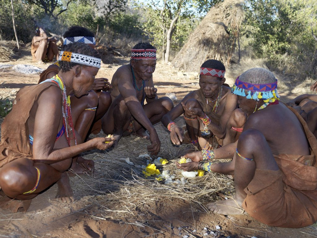 Stock Photo: 4272-2817 A group of NS hunter gatherers enjoy eating an ostrich egg, which has been baked in the embers of a fire. The NS live in the harsh environment of a vast expanse of flat sand and bush scrub country straddling the Namibia Botswana border.