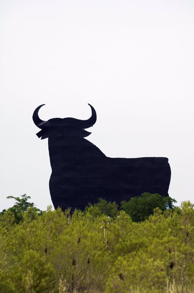 Stock Photo: 4272-30207 Silhouette of Model Bull