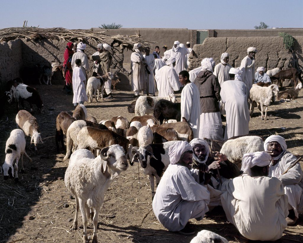 Stock Photo: 4272-31332 Nubian men at a small livestock market at Ghaba, south of Old Dongola.