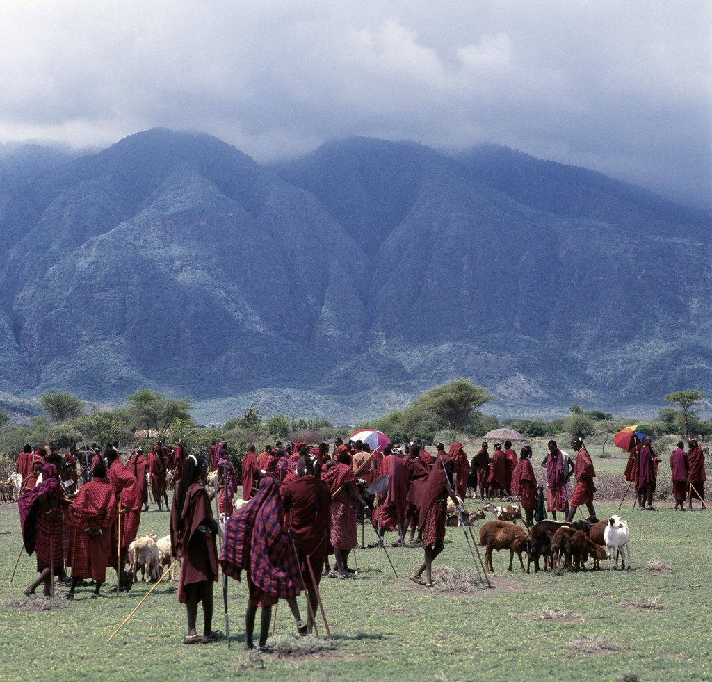 A colourful Maasai livestock market near the towering extinct volcano of Kerimasi. : Stock Photo
