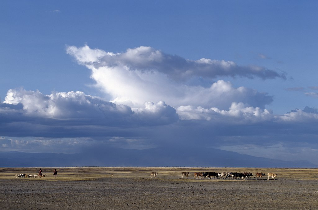 Stock Photo: 4272-32973 With storm clouds gathering over the Ngorongoro Highlands, A Datoga woman and her son drive their family's livestock home in the late afternoon across the grassy plains west of the Lake Manyara National Park.