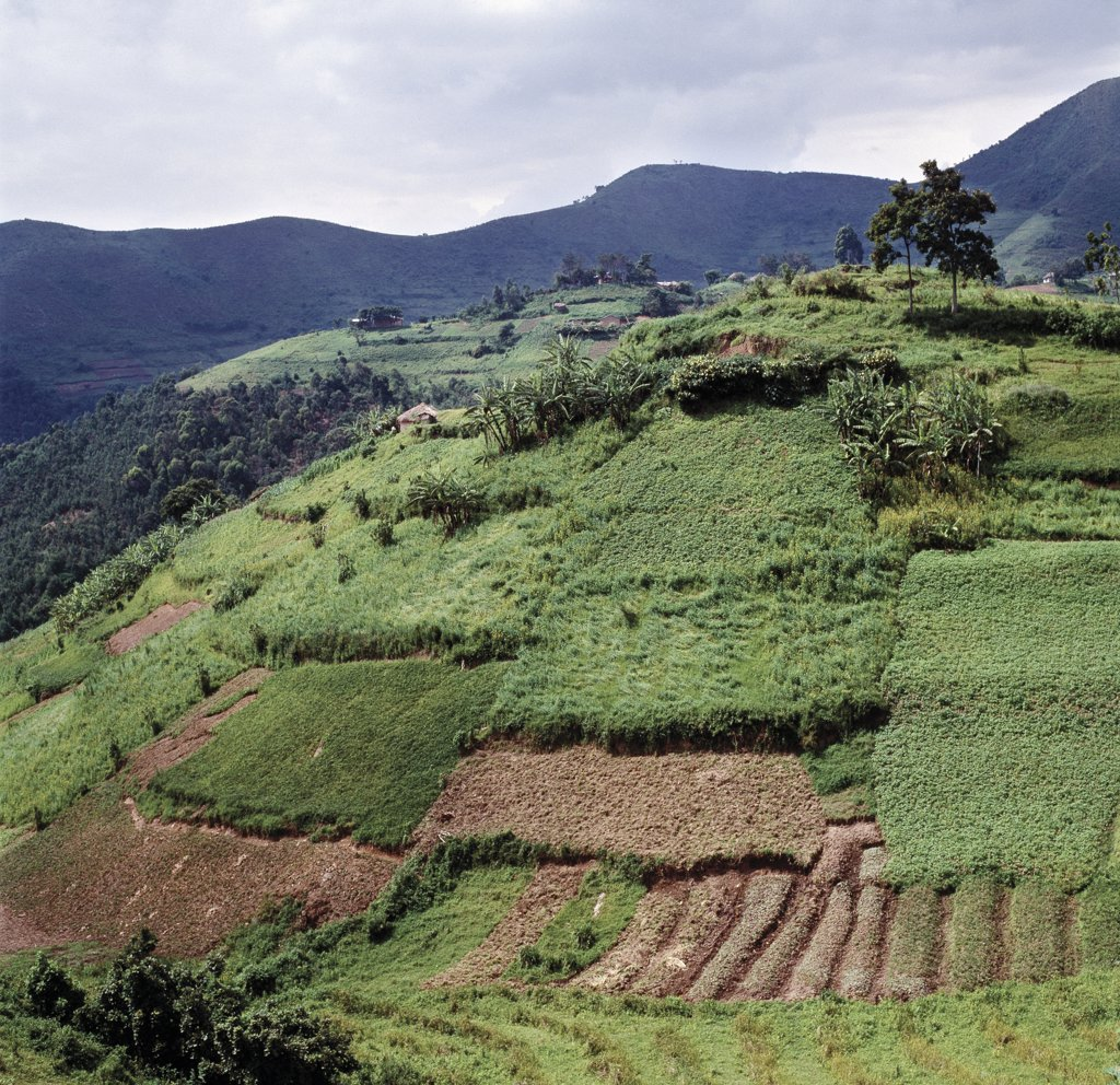 Stock Photo: 4272-33724 The beautiful hill-country of Southwest Uganda and Rwanda supports one of the highest human population densities in Africa.  Consequently, every square inch of this fertile volcanic land is tilled and crudely terraced on steep hill slopes to prevent erosion. Blessed with good rainfall, almost every conceivable crop is grown.