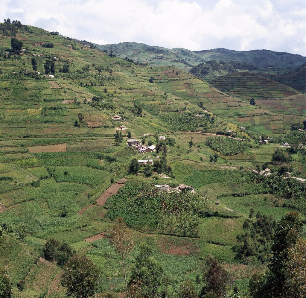 The beautiful hill-country of Southwest Uganda and Rwanda supports one of the highest human population densities in Africa.  Consequently, every square inch of this fertile volcanic land is tilled and crudely terraced on steep hill slopes to prevent erosion. Blessed with good rainfall, almost every conceivable crop is grown. : Stock Photo