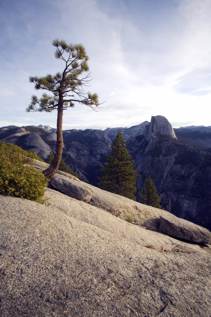 Stock Photo: 4272-34626 United States, California, Yosemite National Park. A lone pine clings to a bare rock face at Glacier Point, with Half Dome in the distance.