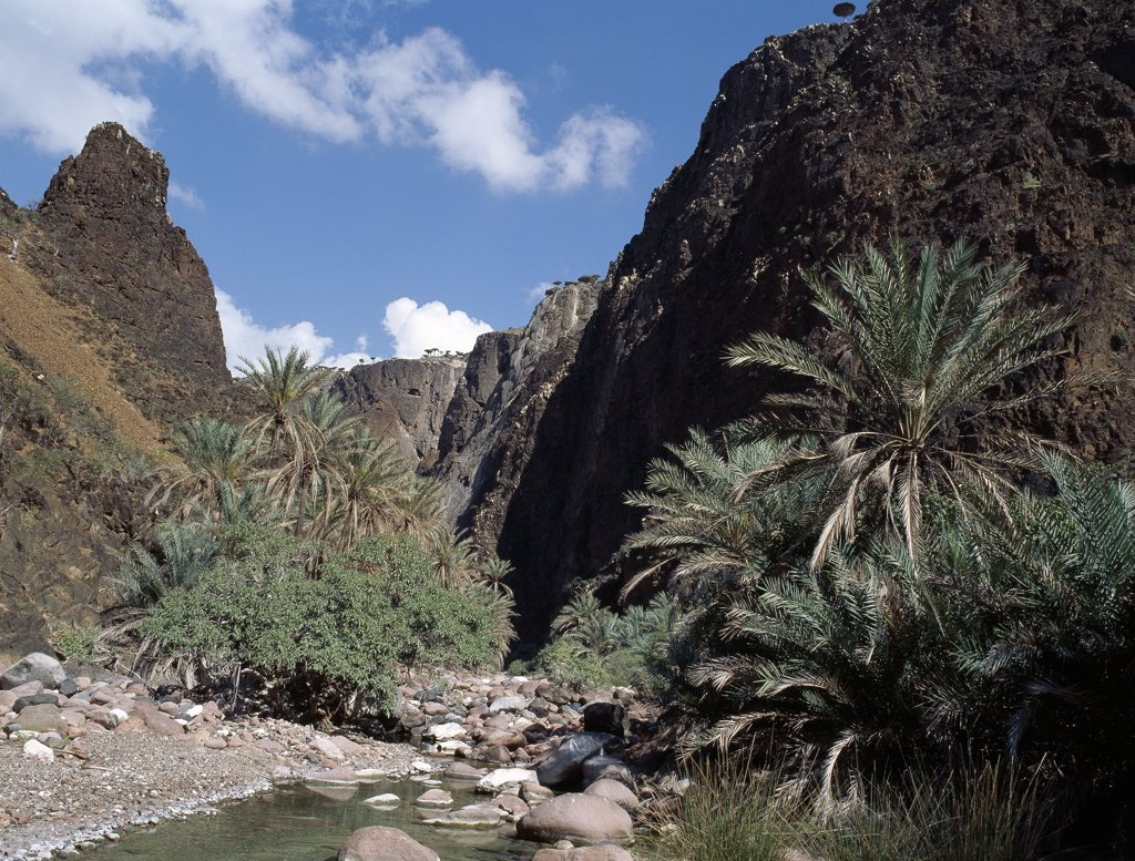 The Haghir Mountains form a spectacular spine in the centre and northwest of Socotra Island. Rising to a height of almost 5,000 feet, they are frequently shrouded in cloud and mist resulting in lush vegetation at higher altitudes. The beautiful Diharo Wadi is fringed with date palms and has a permanent stream running through it, which is an important water resource for many of the islands inhabitants. : Stock Photo