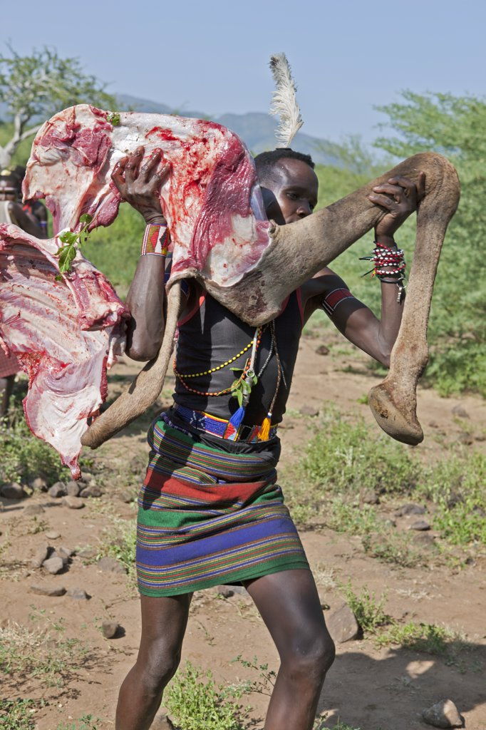 Stock Photo: 4272-37558 After a Pokot initiate has speared an animal during his Sapana ceremony, the meat will be roasted and apportioned according to tradition.