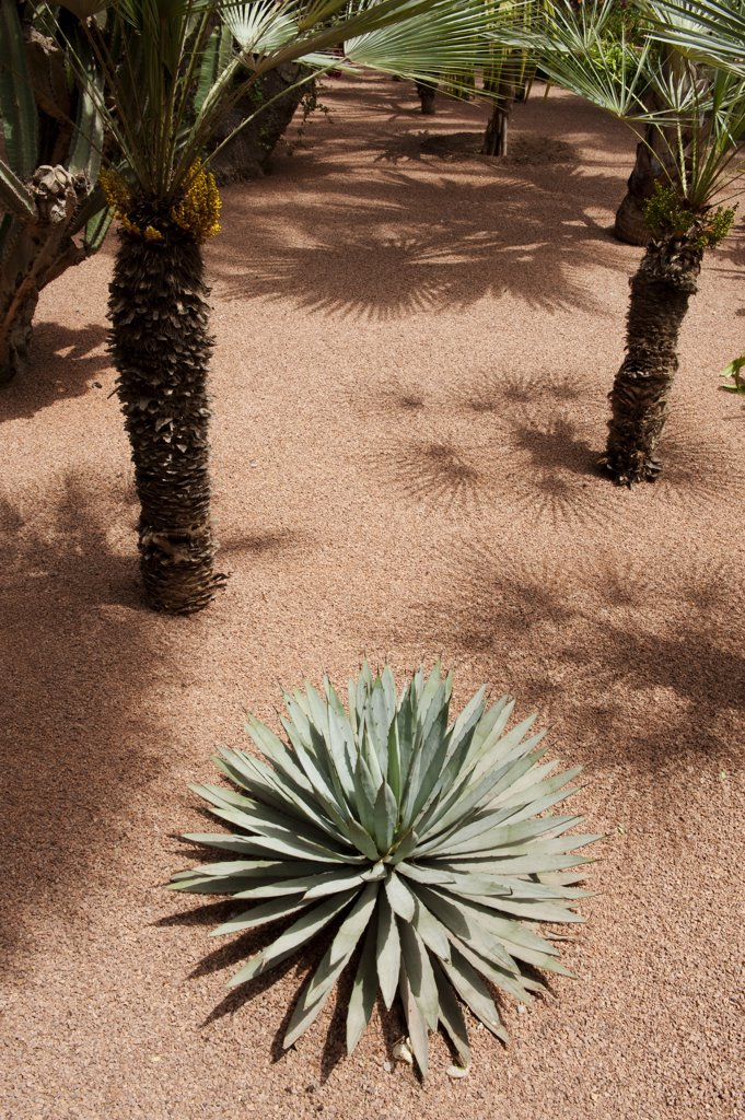 Stock Photo: 4272-37741 The Majorelle Garden is a botanical garden in Marrakech, Morocco.