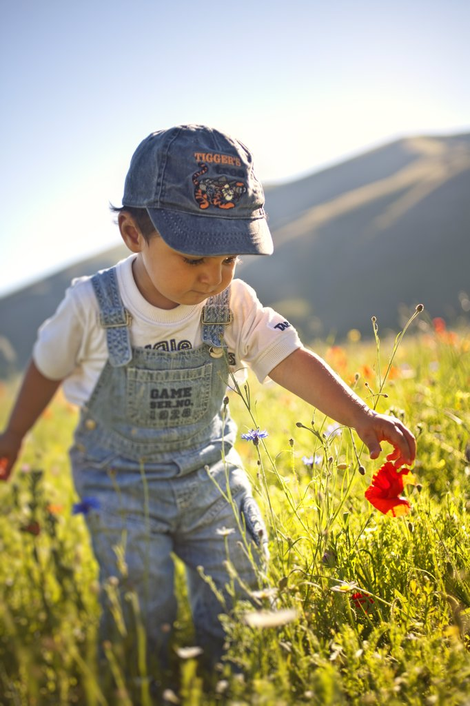 Italy, Umbria, Perugia district, Monti Sibillini National Park, Castelluccio di Norcia, baby picks a poppy. MR : Stock Photo