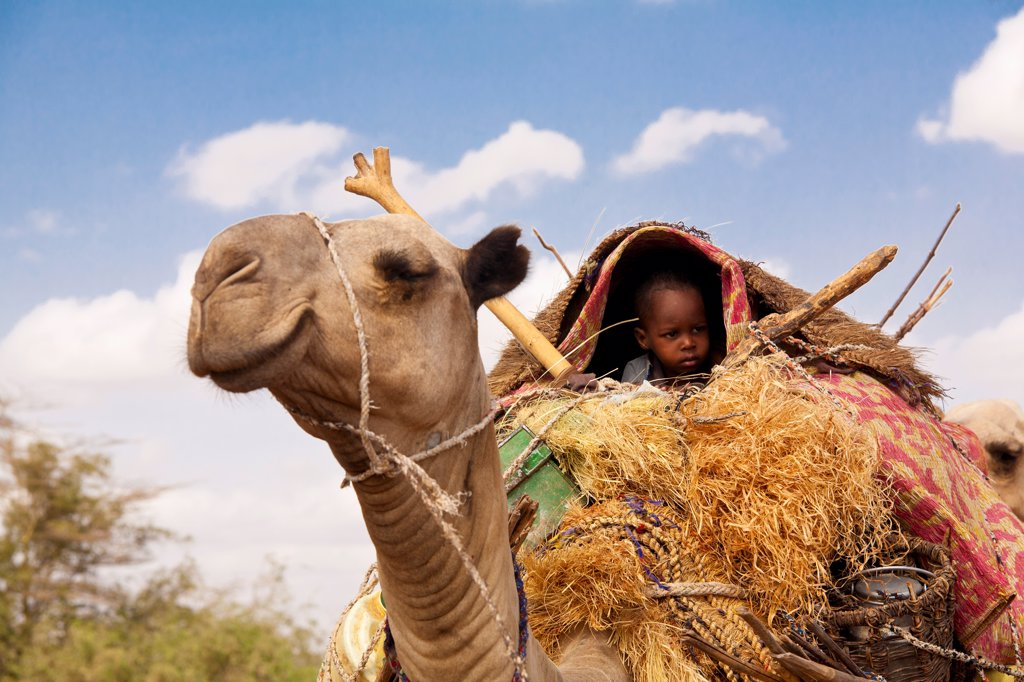 Stock Photo: 4272-40715 Merti, Northern Kenya. A child on top of a camel as a nomadic family migrates.