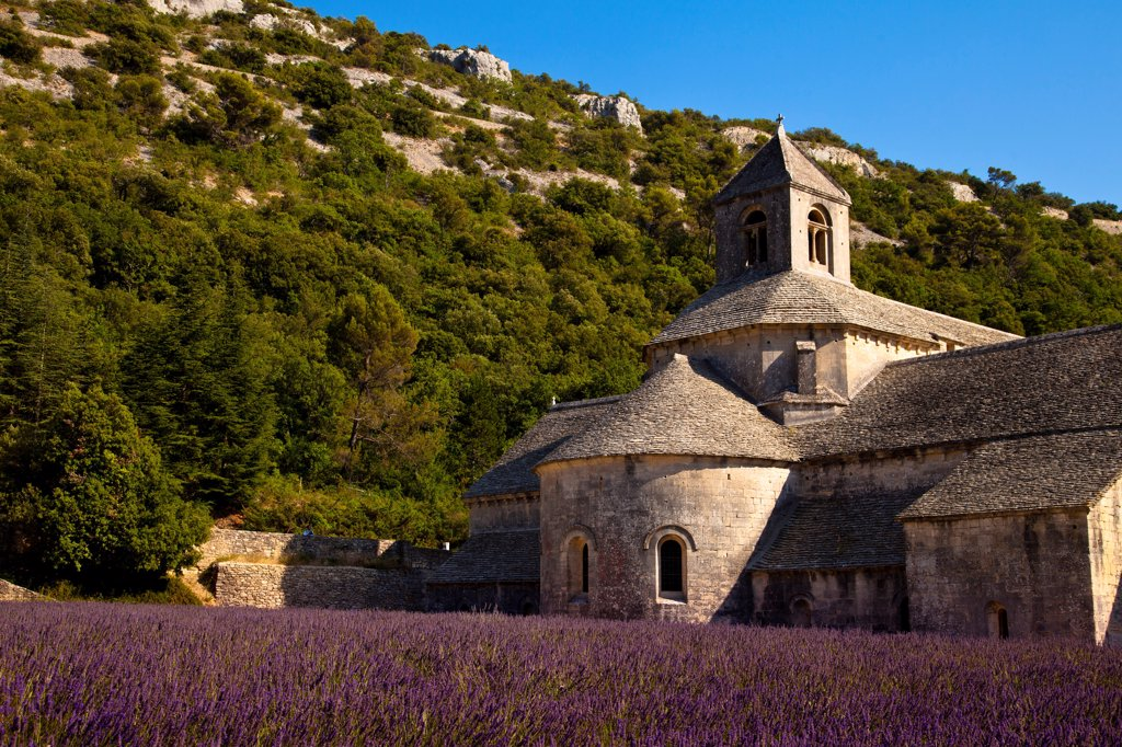 Stock Photo: 4272-41661 Blooming field of Lavender , Lavandula angustifolia, in front of Senanque Abbey, Gordes, Vaucluse, Provence Alpes Cote dAzur, Southern France, France