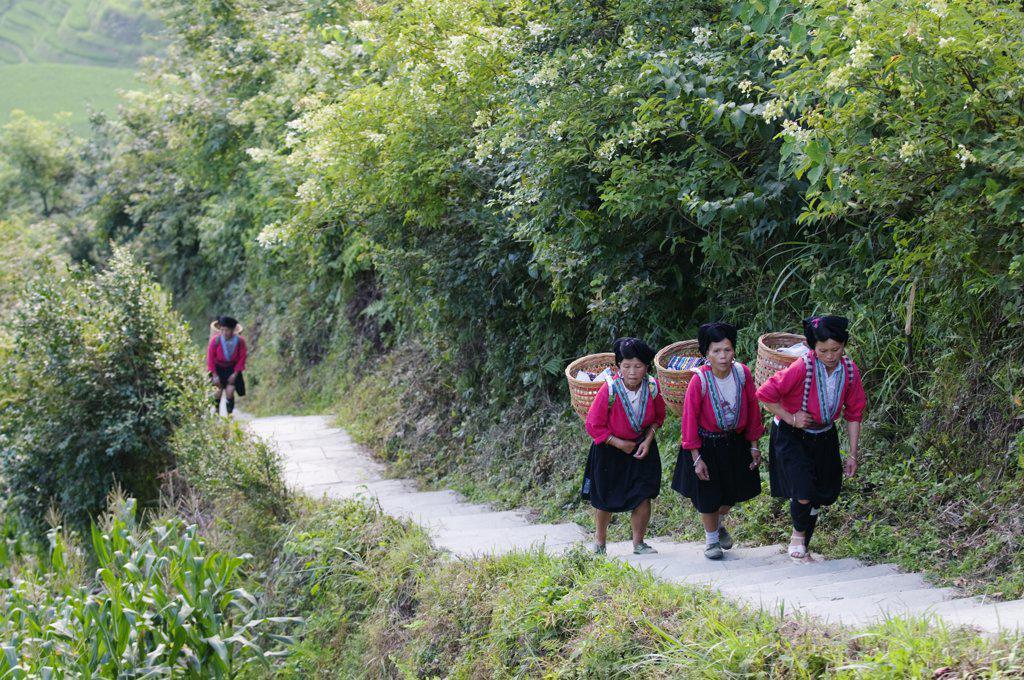 Stock Photo: 4272-5065 China, Guangxi Province, Longsheng Dragons Backbone Rice Terraces near Guilin. Yao women in traditional clothing