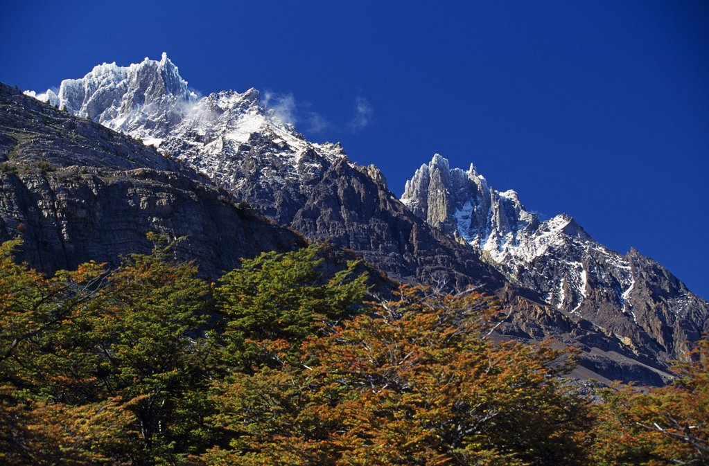 Stock Photo: 4272-6084 Autumn foliage in front of the corniced summit of Paine Grande