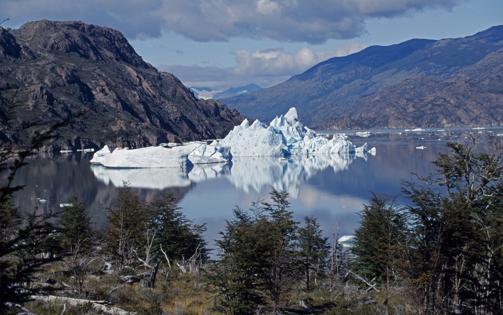 Stock Photo: 4272-6085 Icebergs on Lago Grey, Torres del Paine National Park, Patagonia, Chile