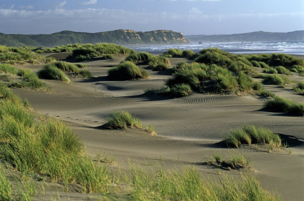 Stock Photo: 4272-6445 Chile, Region X, Parque National Chiloe. Dunes on the west coast of Chiloe in Southern Chile
