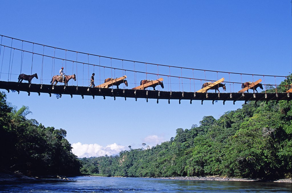 Stock Photo: 4272-7409 Mule train crossing a bridge over the Rio Upano, Moreno Santiago Province, Ecuador
