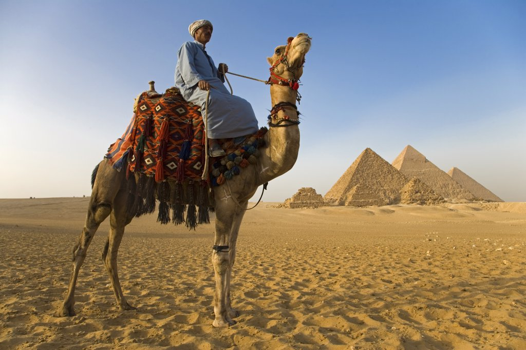 Stock Photo: 4272-7693 A camel driver stands in front of the pyramids at Giza, Egypt (MR).