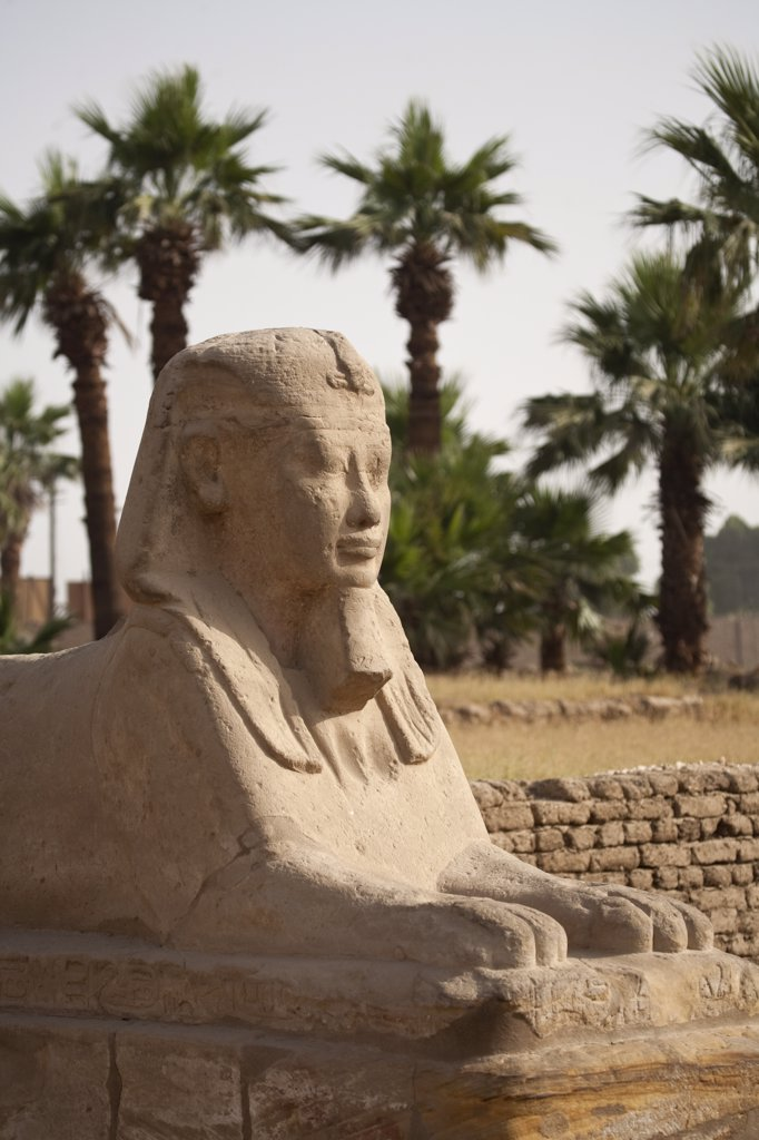 Stock Photo: 4272-7788 Egypt, Luxor. An ancient sphinx, part of an avenue of sphinxes leading to Luxor Temple.
