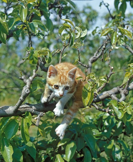 Red And White Cat, Kitten Playing In Tree : Stock Photo