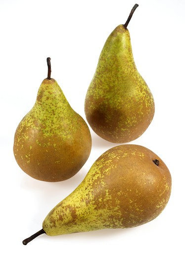 Stock Photo: 4273-4662 Conference Pear, Pyrus Communis, Fruits Against White Background