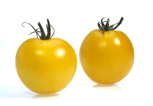 Yellow Tomatoes, Solanum Lycopersicum, Vegetable Against White Background : Stock Photo
