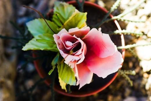 Silk flower : Stock Photo
