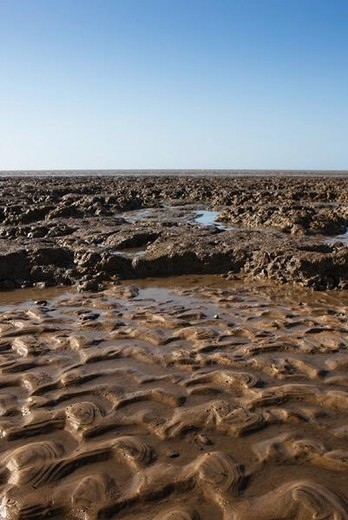 Mud flat, Amazon, South America : Stock Photo
