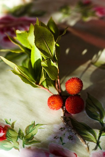 Stock Photo: 4277-2084 Arbutus berries