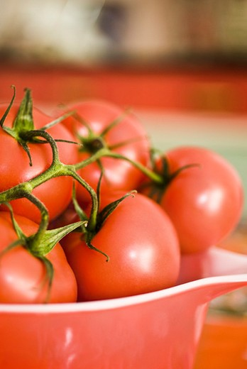 Ripe vine tomatoes in bowl : Stock Photo