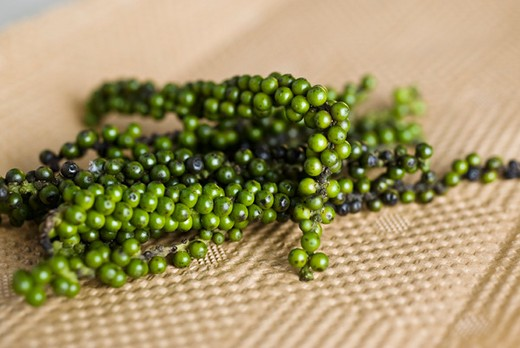Stock Photo: 4277-2110 Fresh green peppercorns
