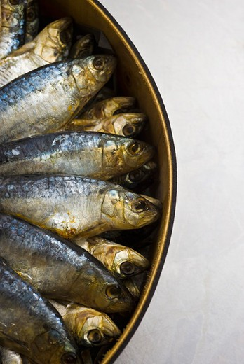 Fresh raw sardines in barrel : Stock Photo