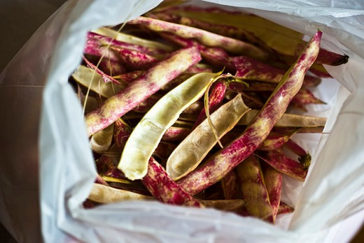 Stock Photo: 4277-2133 Italian borlotti beans