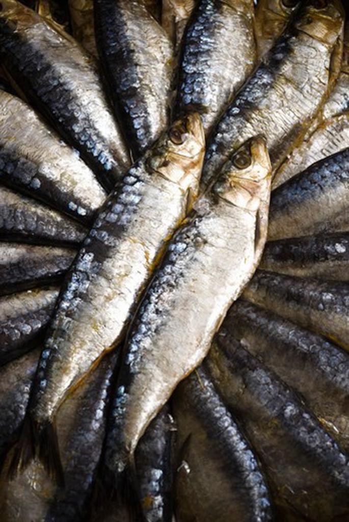 Fresh raw sardines : Stock Photo