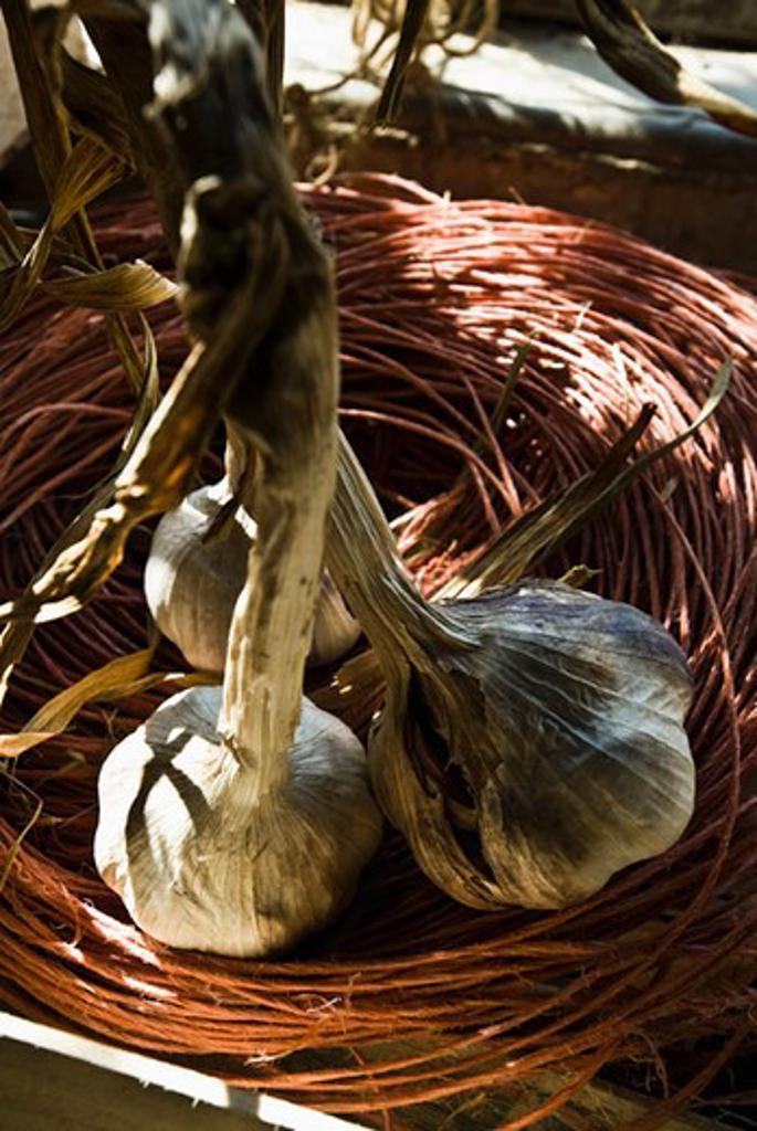 Fresh garlic bulbs : Stock Photo