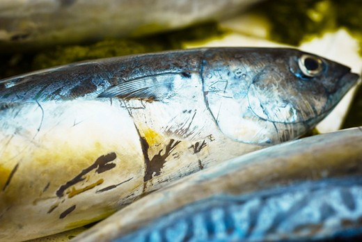 Stock Photo: 4277-2233 Raw fresh fish