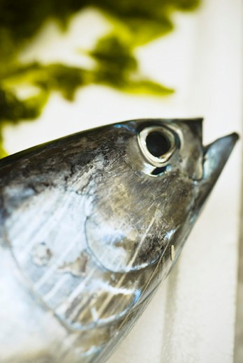 Stock Photo: 4277-2234 Raw fresh fish