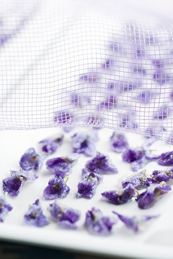 Drying crystallized violets on wax paper : Stock Photo