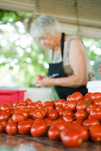 Stock Photo: 4277-2575 Preparing tomatoes for canning