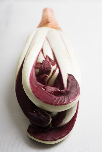 Stock Photo: 4277-2619 Radicchio tardivo