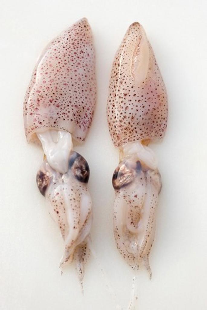 Stock Photo: 4277-2671 Fresh whole squid