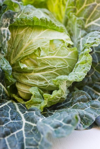 Stock Photo: 4277-2700 Fresh cabbage, close-up