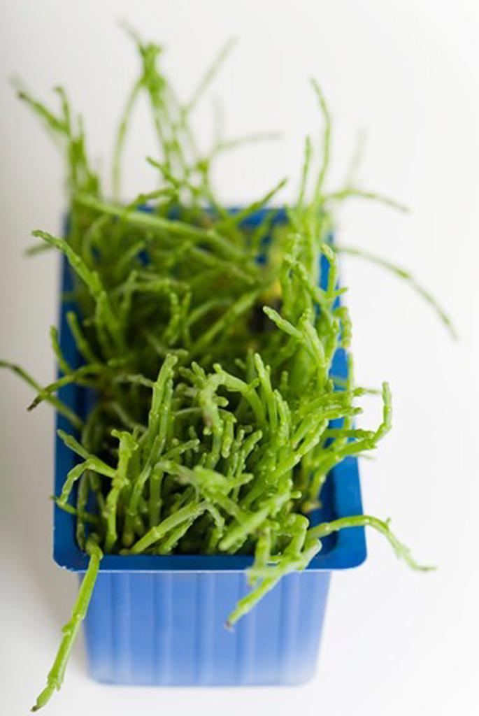 Stock Photo: 4277-2733 Salicornia
