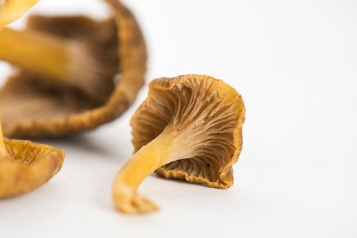 Chanterelle mushrooms : Stock Photo
