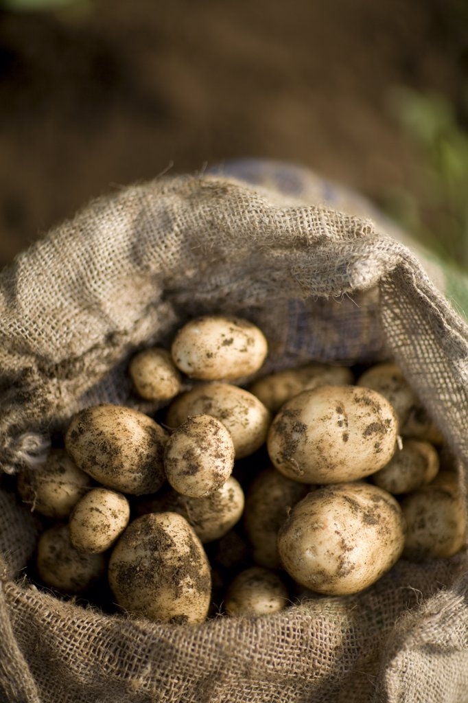 Close up of sac of new potatoes : Stock Photo