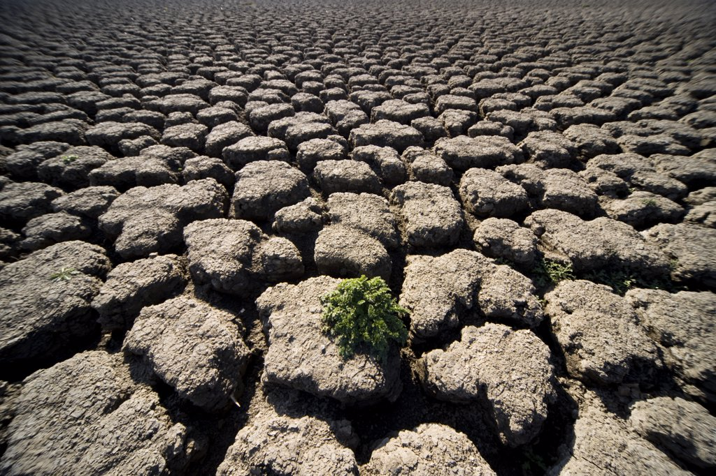 Stock Photo: 4278-2174 Close up of gray dry soil and one green plant