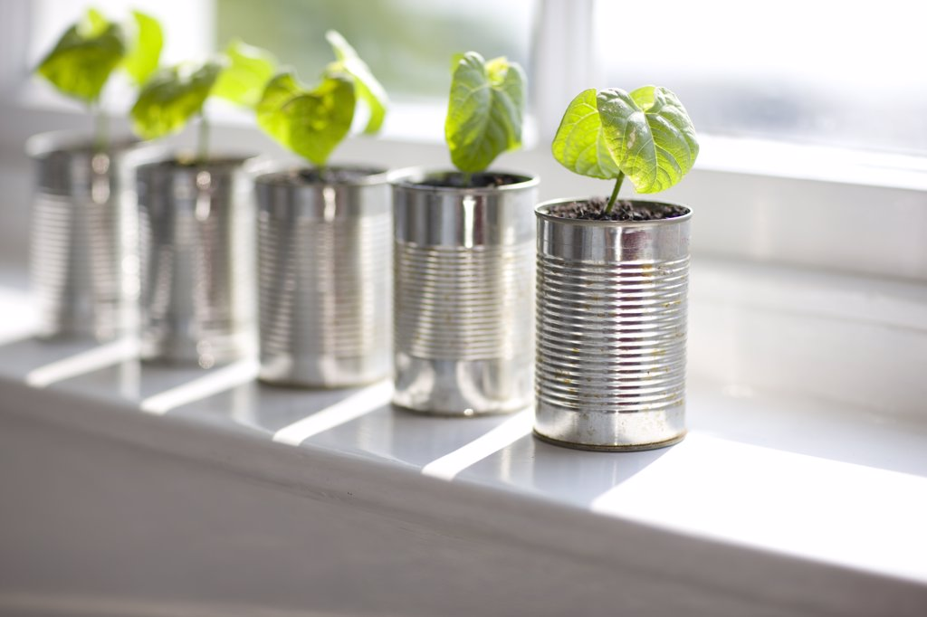 Stock Photo: 4278-3111 Recyclable tin cans with seedlings on a window sill