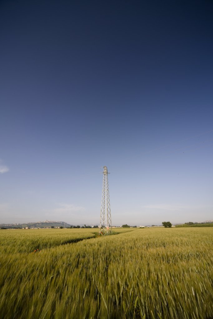 Electricity pylon on a wheat field : Stock Photo