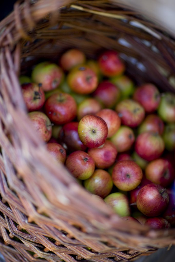 Stock Photo: 4278-4315 Close up of a wicker basket filled with apples
