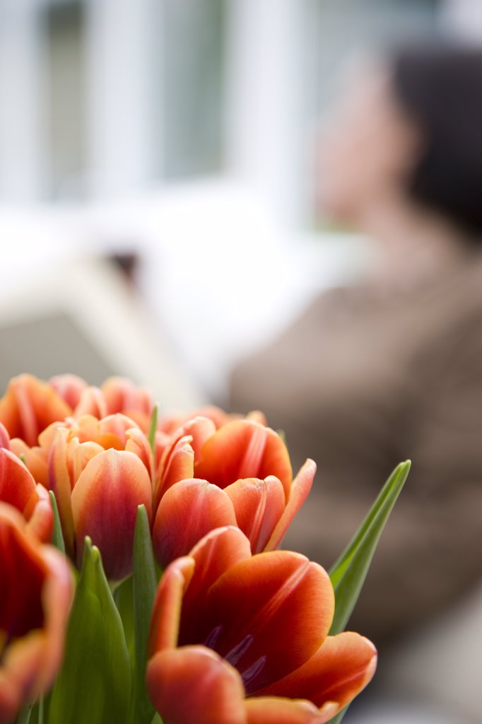 Close up of a bunch of tulips  with woman sitting behind them : Stock Photo