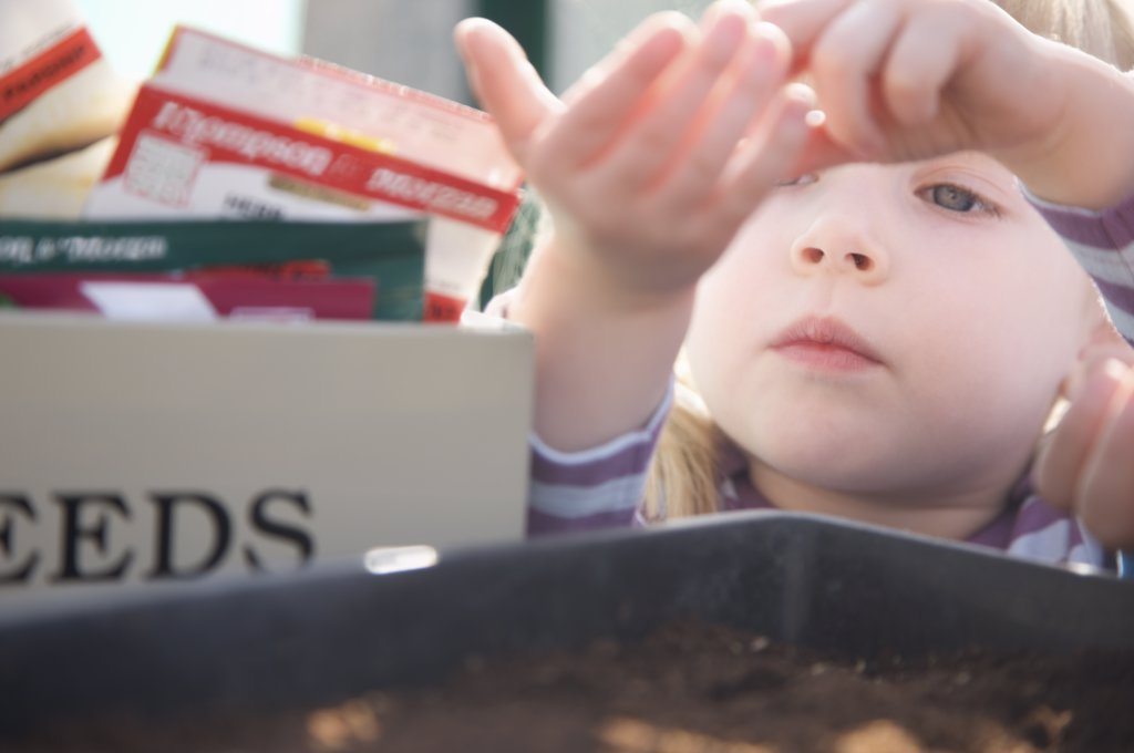 Stock Photo: 4278-5470 Extreme close up of a girl pouring seeds into a gardening tray